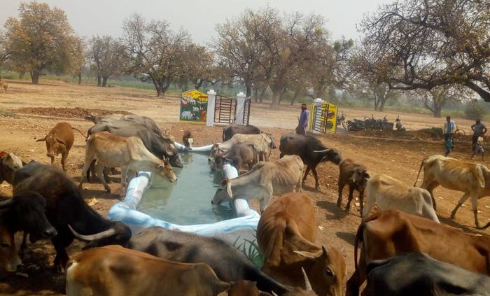रायपुर जिले के 97 ग्राम पंचायतों में बनाया जा रहा गौठान, 10 ग्राम पंचायतें बन रही मॉडल