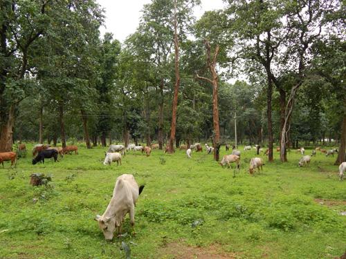 lakhanpur-van