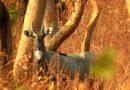 वन्यप्राणी सप्ताह में 2 से 8 अक्टूबर तक फ़ोटोग्राफ़ी प्रतियोगिता के साथ होंगे अन्य कार्यक्रम